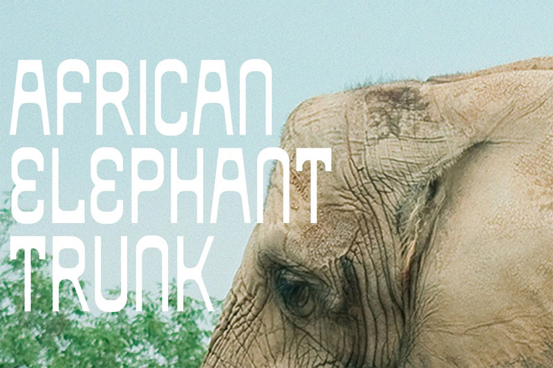 african elephant trunk african font
