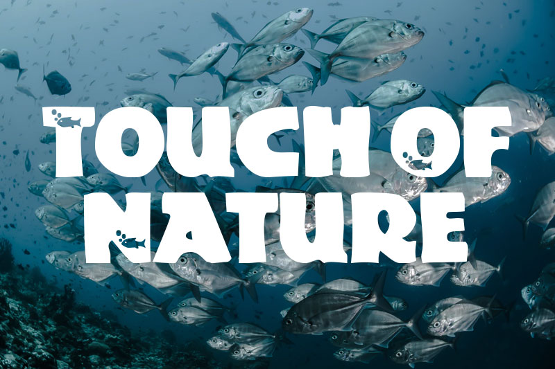 touch of nature animal font